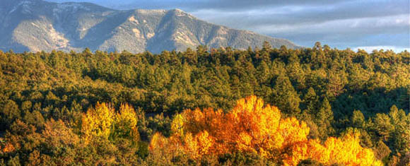 Fall color in northern New Mexico, copyright Nina Anthony