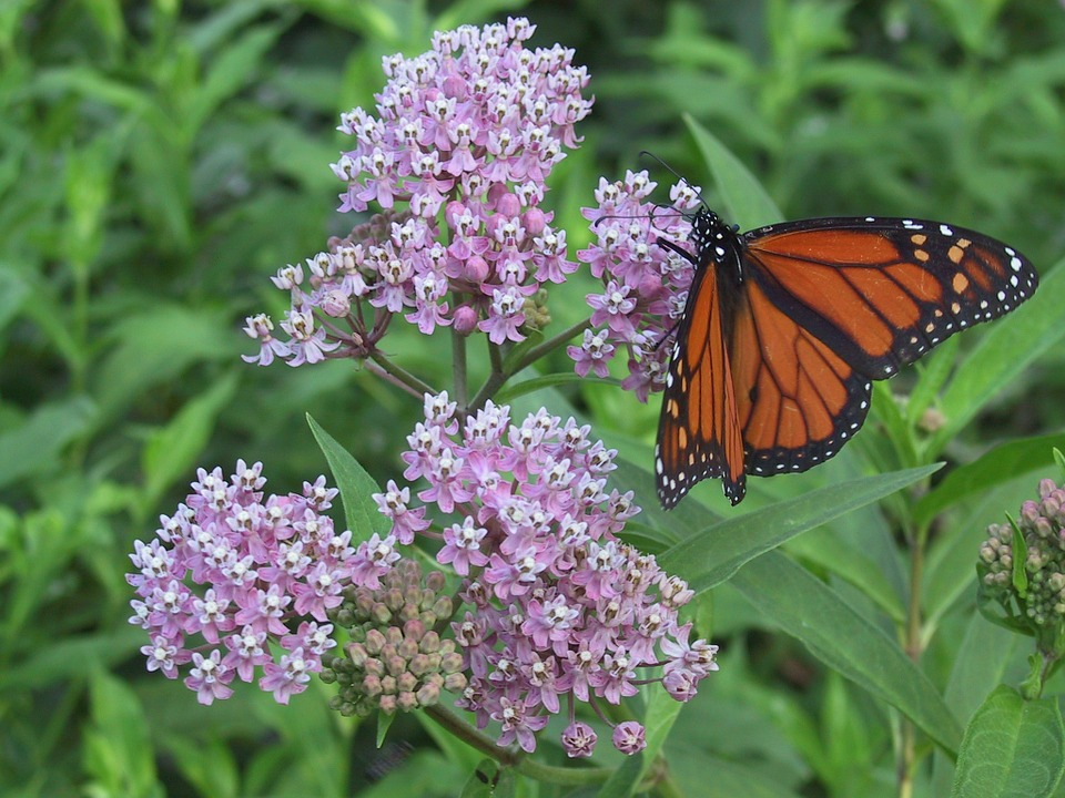 October in Taos: Free Guided Hikes, a Mountain Bike Ride and Milkweed Planting for the Butterflies